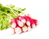Fresh radish. On white background Royalty Free Stock Image