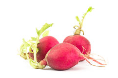 Fresh radish. On white background Stock Image