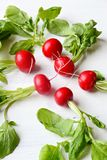 Fresh radish. On the white background Stock Photos
