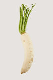 Fresh radish. On white background Stock Photo