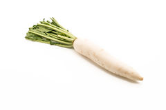 Fresh Radish on white. Background Stock Photos