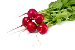 Fresh radish. On white background, food concept Royalty Free Stock Photography
