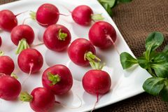 Fresh radish on white plate. Freshly harvested organic vegetables. Red natural european radishes Royalty Free Stock Image