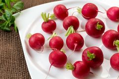 Fresh radish on white plate. Freshly harvested organic vegetables. Red natural european radishes Stock Image