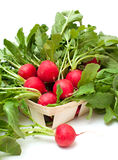 Fresh radish in a wooden basket. Fresh radish on a basket isolated on white background Stock Photos
