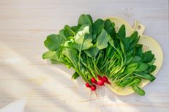 Fresh radish. Young leaves of spinach. Light wooden background. Place for text. Top view with copy space royalty free stock image