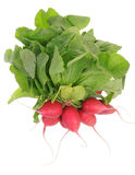 Fresh radishes Stock Photography