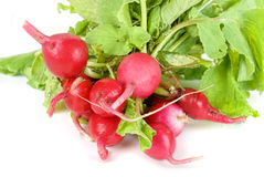 Fresh radishes Royalty Free Stock Images