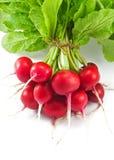 Fresh radishes Royalty Free Stock Photo