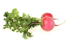 Fresh radishes Royalty Free Stock Photos