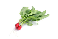 Fresh radishes. On a white background Stock Image