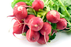 Fresh radishes. Bunch of fresh radishes on white with soft shadow Royalty Free Stock Photography