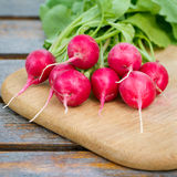 Fresh radishes. On a wooden cutting board Royalty Free Stock Image