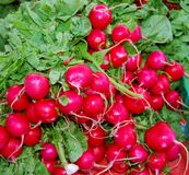 Fresh Radishes Royalty Free Stock Photo