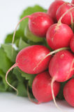 Fresh Radishes Stock Photo