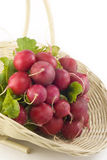 Fresh Radishes in a Basket. A bunch of fresh red radishes in a basket on a white background, vertical with copy space Royalty Free Stock Image