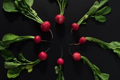 Fresh radishes on black background. Flat lay Stock Image