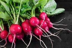 Fresh radishes on black background. Fresh ripe radishes on black rustic background Stock Photography