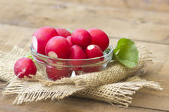 Fresh radishes. In a bowl Royalty Free Stock Photo