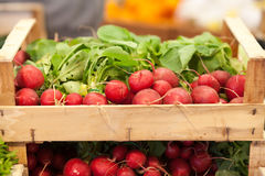 Fresh radishes. In a box at the market Royalty Free Stock Photo