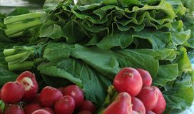 Fresh radishes. From the Brazilian fair Royalty Free Stock Image