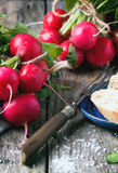 Fresh radishes with bread. Fresh wet radishes with vintage fork, sea salt and bread over old wooden table Royalty Free Stock Photos