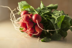 Fresh Radishes. A bunch of fresh radishes Royalty Free Stock Photos