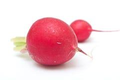 Fresh radishes   closeup Royalty Free Stock Photography