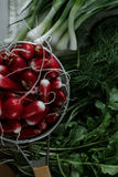 Fresh radishes in a colander and greens on a table. Bunches of fresh salad, dill, onion and radish Royalty Free Stock Images