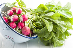 Fresh radishes in colander. Red radishes vegetable Stock Photos
