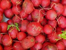 Fresh radishes collected on the farm. Close-up Royalty Free Stock Photos