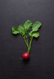 Fresh radishes on a dark wooden background. Stock Image