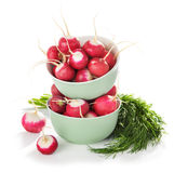 Fresh radishes, dill isolated. On white background Stock Photography