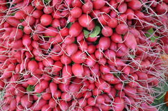 Fresh Radishes. On display and for sale at a local Farmers Market Stock Images