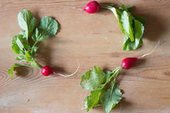 Fresh radishes frame on wooden background, top view Royalty Free Stock Image