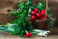 Fresh radishes, fresh green onion and different fresh herbs on. Organic fresh radishes, bunch of fresh green onion and different fresh herbs on rural wooden Stock Photography