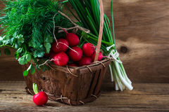 Fresh radishes, fresh green onion and different fresh herbs on Stock Photography