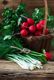 Fresh radishes, fresh green onion and different fresh herbs on. Organic fresh radishes, bunch of fresh green onion and different fresh herbs on rural wooden Royalty Free Stock Photography