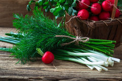 Fresh radishes, fresh green onion and different fresh herbs on. Organic fresh radishes, bunch of fresh green onion and different fresh herbs on rural wooden Stock Photos