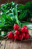 Fresh radishes, fresh green onion and different fresh herbs on Royalty Free Stock Image