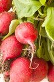 Fresh radishes. Freshly plucked radishes close-up Stock Images