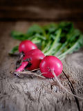 Fresh radishes from the garden. Beautiful fresh radishes from the garden home Royalty Free Stock Photos