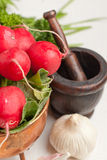 Fresh radishes with garlic. Bunch of fresh radishes with garlic, parsley and vintage mortar on white table Stock Photography