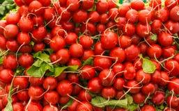 Fresh radishes. On the green market Royalty Free Stock Image