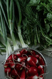 Fresh radishes and greenery on the table. Bunches of fresh salad, dill, onion and radish Royalty Free Stock Photos