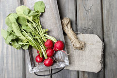 Fresh radishes from ground on old wooden table. Fresh radishes. Gardener's accessories around Royalty Free Stock Photography