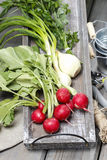 Fresh radishes from ground on old wooden table. Fresh radishes. Gardener's accessories around Royalty Free Stock Photo