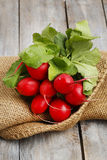 Fresh radishes from ground on old wooden table. Healthy food Stock Image