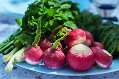 Fresh radishes and fresh herbs on a plate.  Royalty Free Stock Images