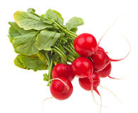 Fresh radishes isolated on white. Background Royalty Free Stock Photography